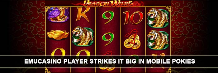 dragon-wild-mobile-pokie-big-win